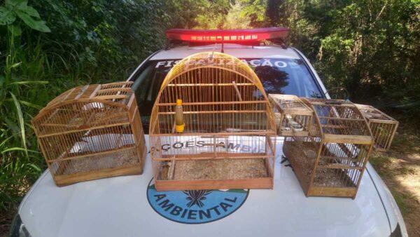 Pássaros, comuns na região, foram devolvidos ao seu habitat natural | Foto: Ascom/PMSPA